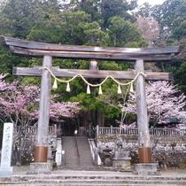 神社写真、桜