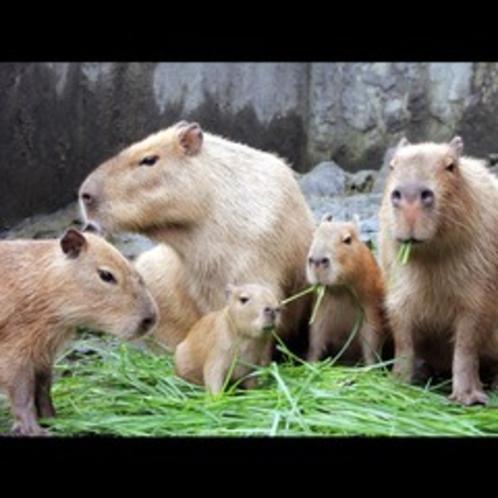 シャボテン動物公園