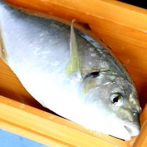 獲れたての活きた魚をお出しする直前に捌きます☆