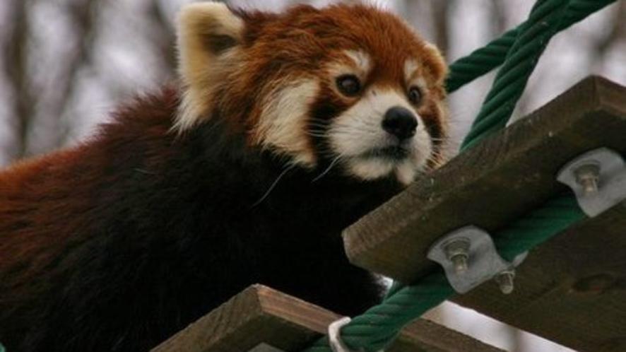 旭山動物園イメージ