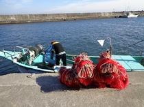 イセエビ網漁出船