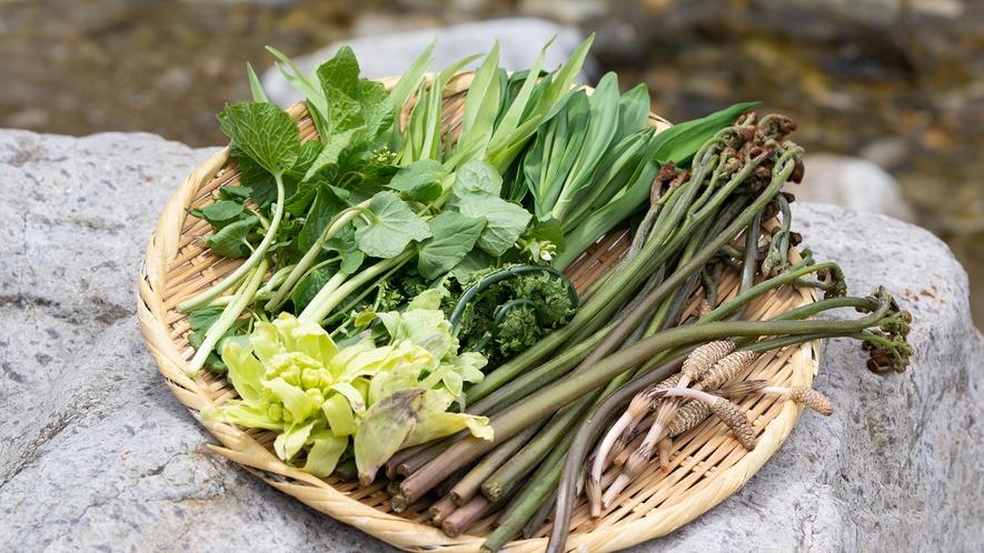 利賀の山菜