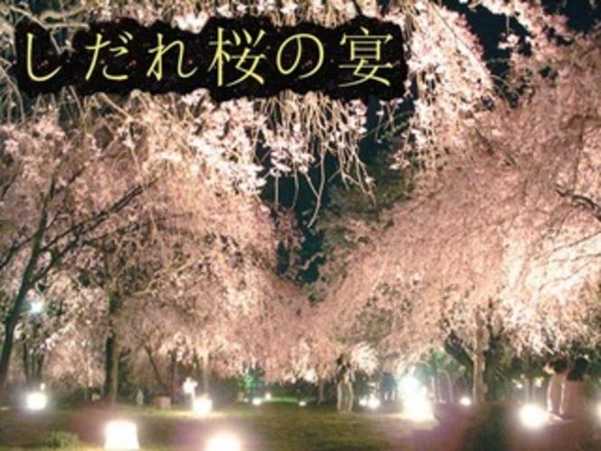 しだれ桜の宴
