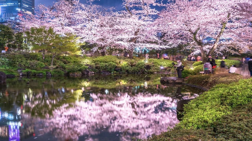 当館からタクシーで10分の六本木毛利庭園!夜桜がキレイです!