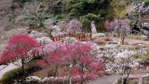 【熱海梅園】1月中旬から3月上旬開催の梅まつり