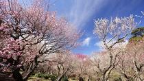 【熱海梅園】日本で最も早咲きの梅を愉しめる観光スポット