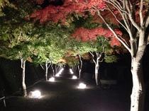 紅葉祭り ライトアップ