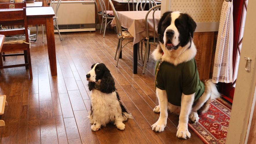 レストランへはワンちゃん同伴歓迎♪※リード着用必須