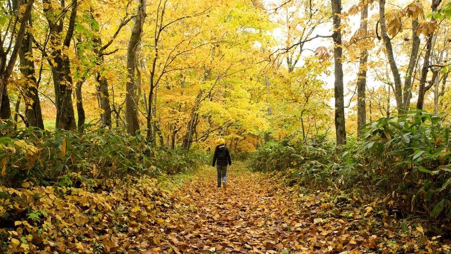 秋のトレッキング