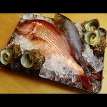 鮮度抜群の魚介素材