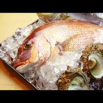 朝獲れ新鮮な魚介