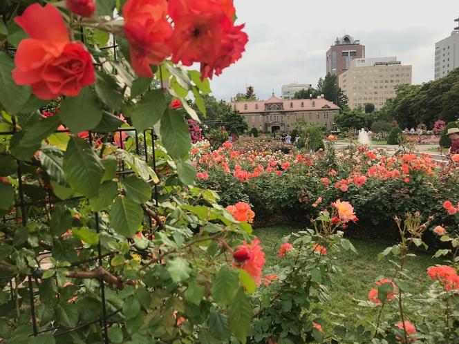 薔薇と資料館