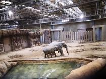 円山動物園ゾウ