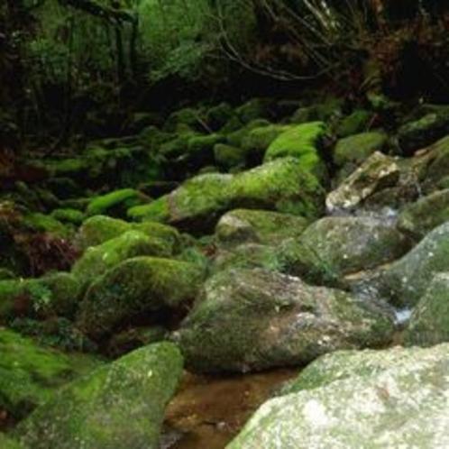 白谷川と苔石