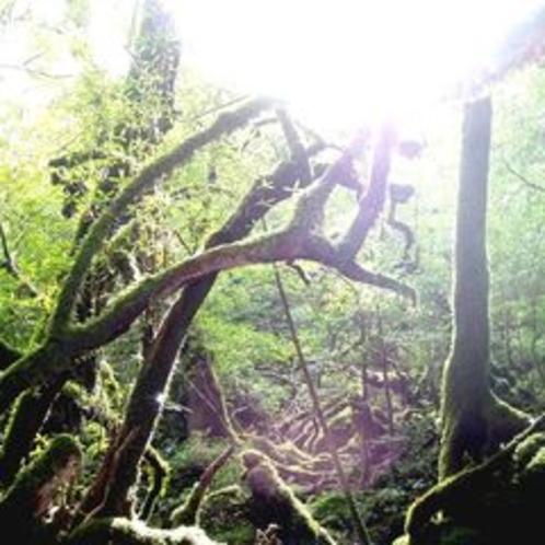 白谷の苔と光