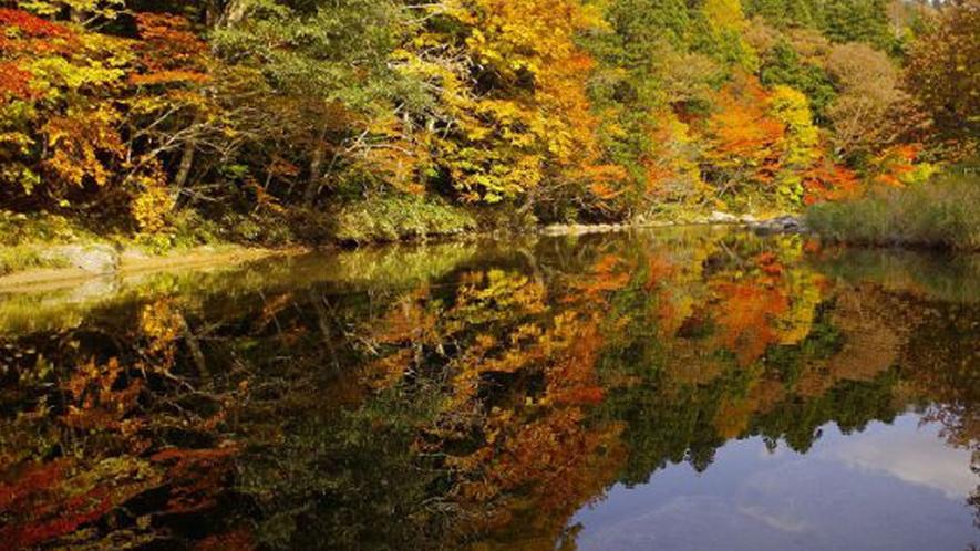 薬研渓流の紅葉(例年の見頃は10月中旬~下旬)当館より約20km・お車にて30分程です。