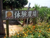 【島人体験】体験農場