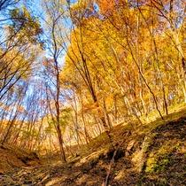 秋の遊歩道