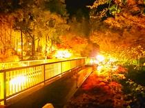 景観(紅葉:夜)