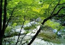 深山自然7