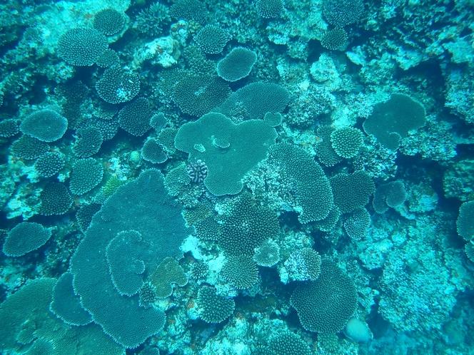 真上からのテーブル珊瑚