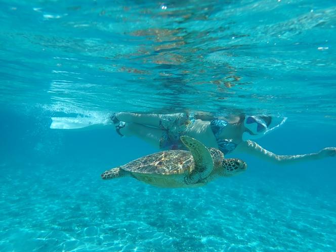 ウミガメとシュノーケル