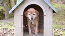 *【看板犬】ペット連れ歓迎☆宿泊代1匹1500円(看板犬が待ってるワン)