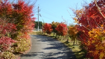 *【秋イメージ】紅葉がきれいです