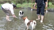 *【ペットの足湯】ペットも足湯がお気に入り♪(春夏のみ)