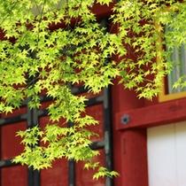 当館すぐ裏の談山神社。秋は紅葉、夏は美しい新緑♪