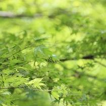 当館すぐ裏の談山神社。春〜夏は新緑溢れます!