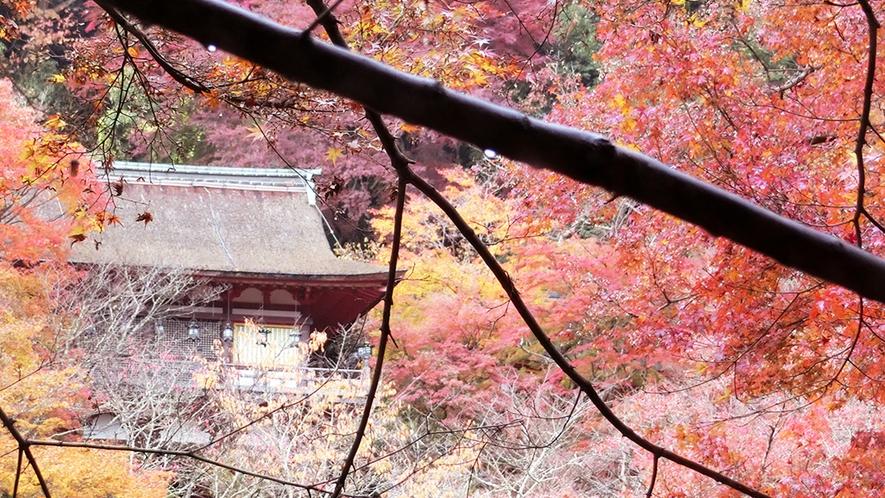 晩秋 談山神社 拝殿