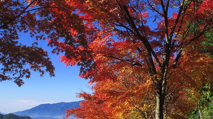 秋 紅葉と山並み