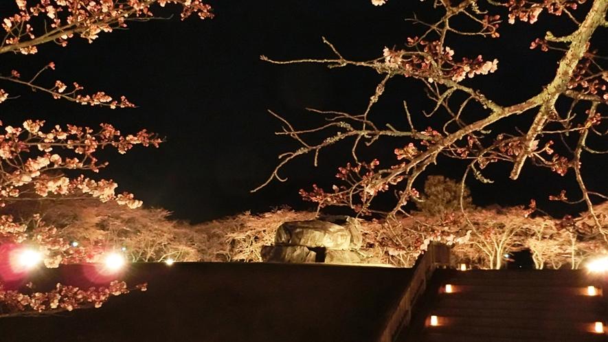 明日香村 石舞台(夜桜)