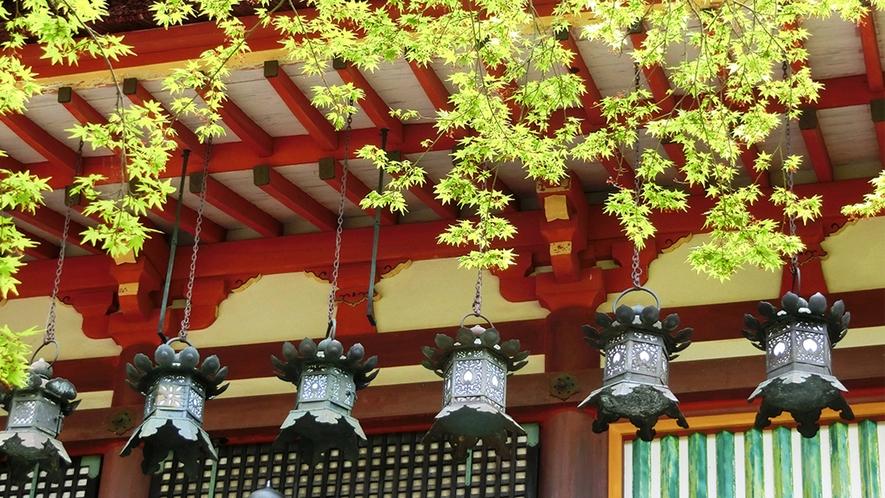 春 吊り灯籠と青もみじ