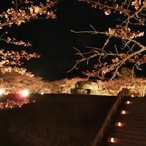 石舞台夜桜ライトアップ