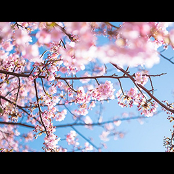 春★花見BBQ