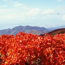 *秋の絶景。蔵王の紅葉は「お釜」から。エコーラインなど見所多数!