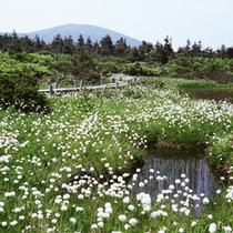 *春には水芭蕉や高山植物を眺めながらの散策で気分爽快。