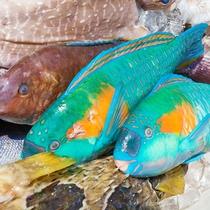 屋我地島周辺で獲れた魚介