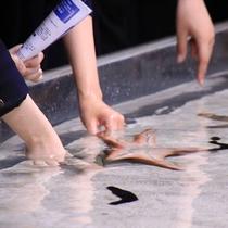 人気スポット「沖縄美ら海水族館」には小動物に触れる水槽も。