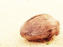 目の前のビーチと椰子の実