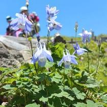 *【アクティビティ】登山や散策中、貴重な花や植物をご覧いただけるかもしれません。