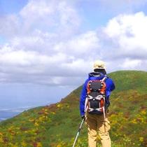 *【アクティビティ/トレッキング】今まで分からなかった山の様子に気づき、新たな発見があるでしょう。