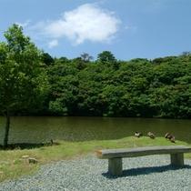 丹生の池(初夏)