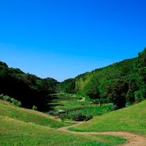 【無料プログラム:里山水生園 早朝散策】インタープリター付の早朝散策は毎朝開催。朝の爽やかな時間。