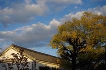 蔵INN家紋 中庭からの景色