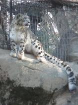 多摩動物公園プラン とっても珍しいタスマニアデビルに会えるかも
