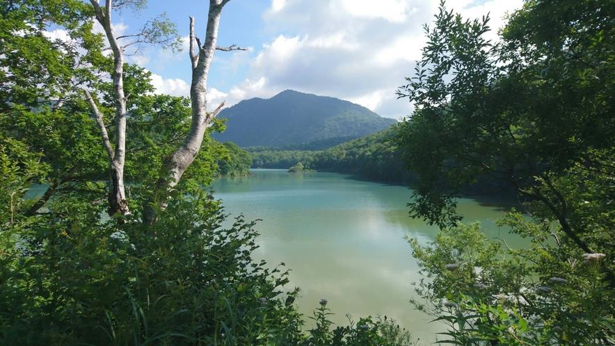 白樺ルートから琵琶池を望む