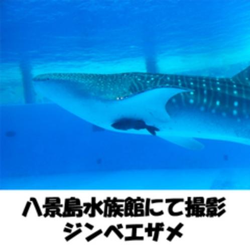 八景島水族館にて撮影【ジンベエザメ】